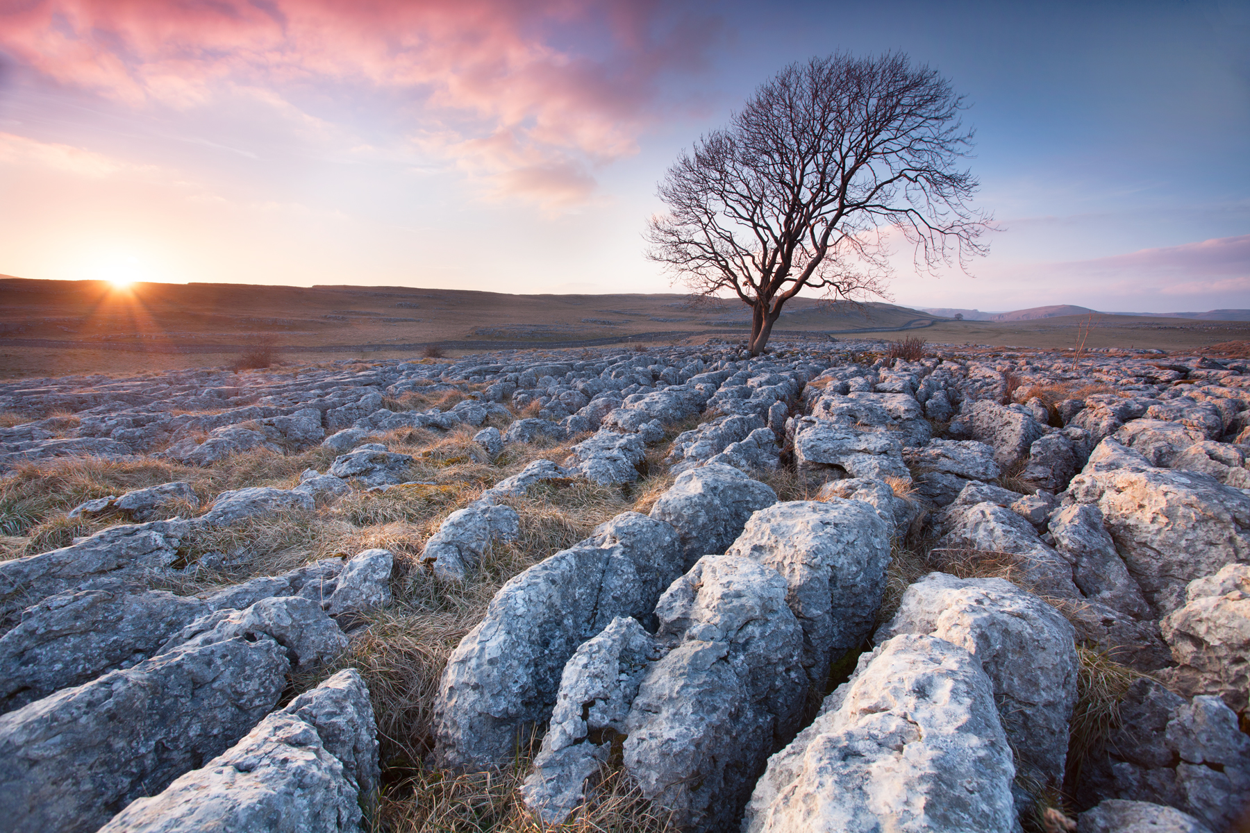 Malham-Tree-1800